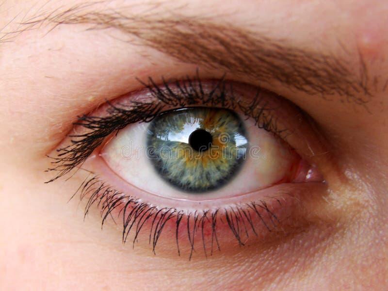 Augen lizenzfreie stockfotos
