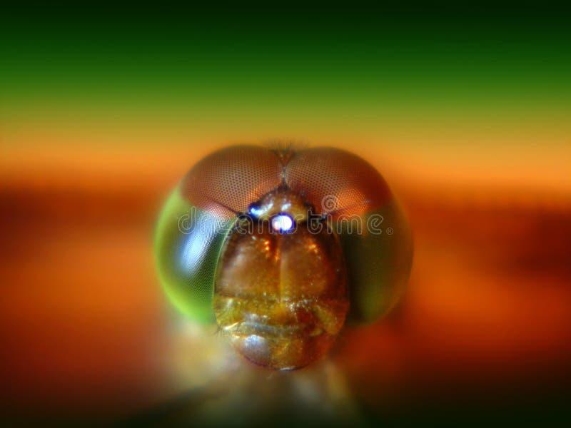 Augen der Libelle