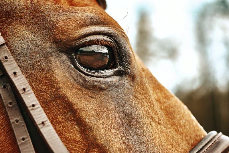 Augen eines nahe gelegenen Pferdes lizenzfreie stockfotos