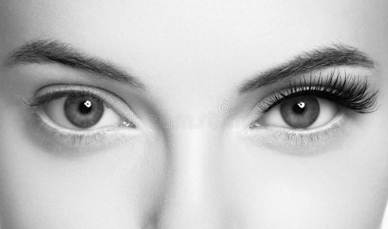 Augenpeitschen, Peitschenerweiterungsfrau peitscht Abschluss herauf Makromonochrom stockfotografie