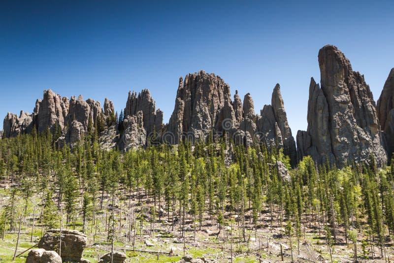 Augmentant en Custer State Park, le Dakota du Sud photographie stock libre de droits
