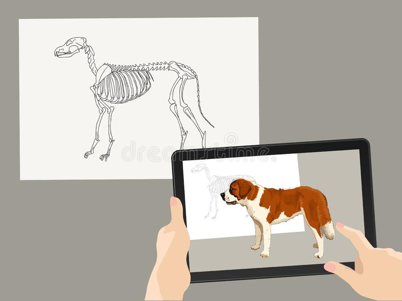 Augmented reality. AR. The skeleton of the dog is complemented by a real image on the tablet screen. Hands hold a gadget. Vector. Augmented reality. AR. The stock illustration