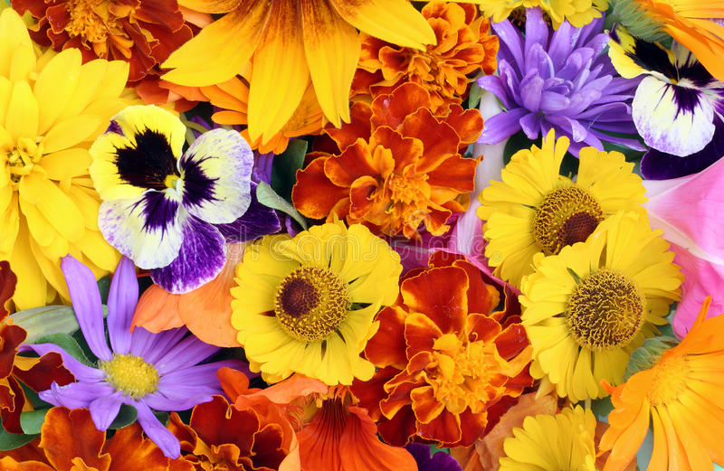August-Blumenmischung stockbilder
