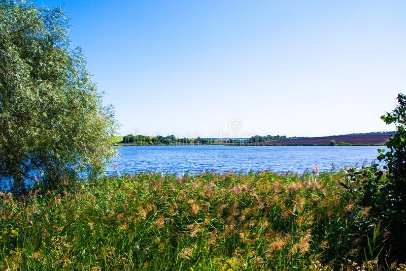 August calm lake. Sunny cloudless day in August, a calm lake, a plowed field, green trees and reeds on the opposite shore of the lake, and reeds on the shore royalty free stock images