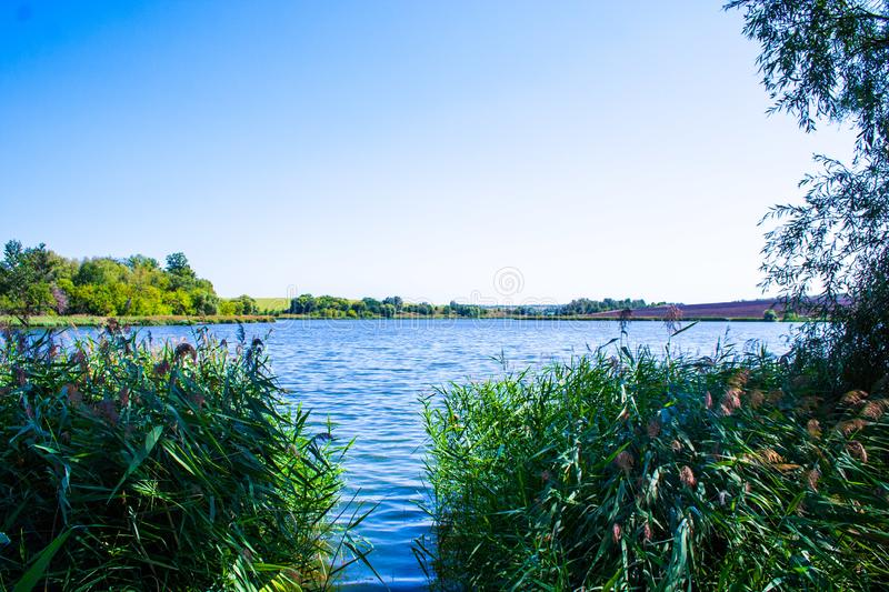 August calm lake. Sunny cloudless day in August, a calm lake, a plowed field, green trees and reeds on the opposite shore of the lake, and reeds on the shore stock photography