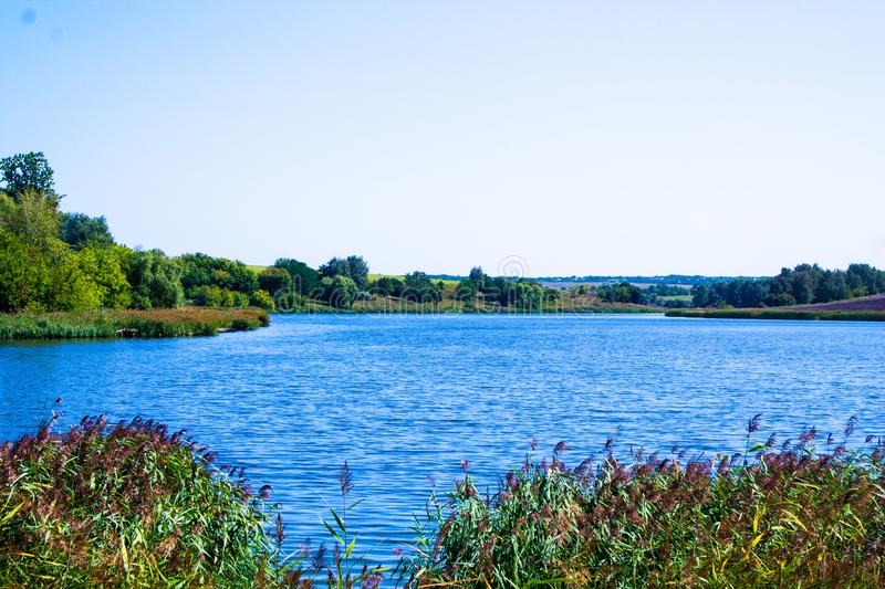 August calm lake. Sunny cloudless day in August, a calm lake, a plowed field, green trees and reeds on the opposite shore of the lake, and reeds on the shore royalty free stock photography
