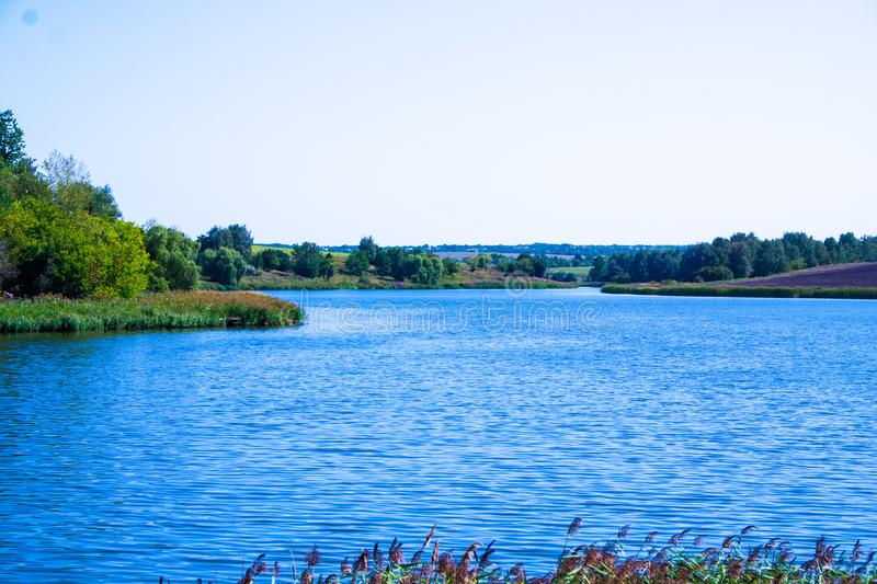 August calm lake. Sunny cloudless day in August, a calm lake, a plowed field, green trees and reeds on the opposite shore of the lake, and reeds on the shore royalty free stock image