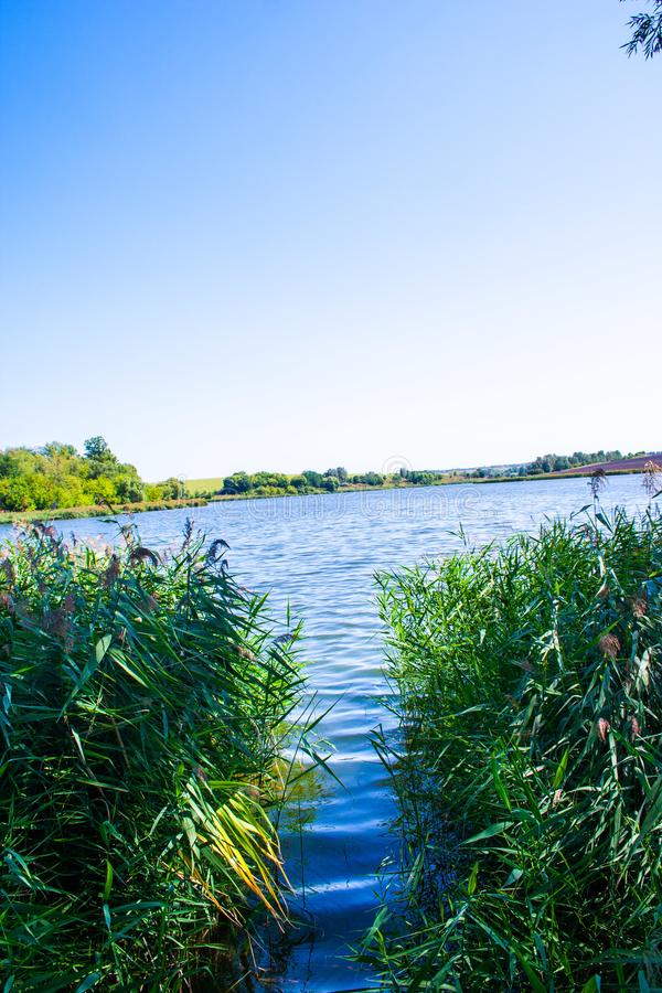 August calm lake. Sunny cloudless day in August, a calm lake, a plowed field, green trees and reeds on the opposite shore of the lake, and reeds on the shore stock image