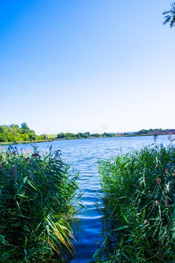 August calm lake. Sunny cloudless day in August, a calm lake, a plowed field, green trees and reeds on the opposite shore of the lake, and reeds on the shore royalty free stock photo