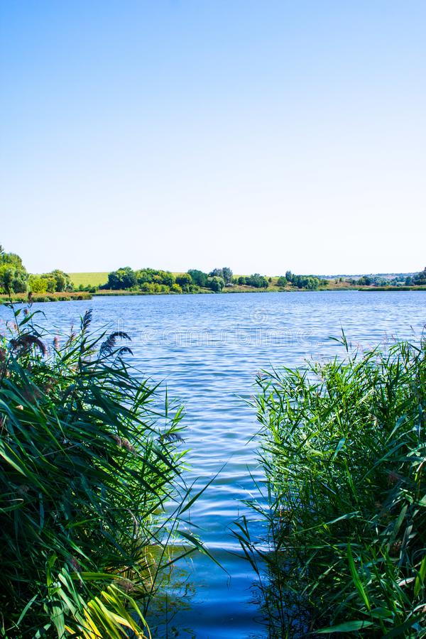 August calm lake. Sunny cloudless day in August, a calm lake, a plowed field, green trees and reeds on the opposite shore of the lake, and reeds on the shore stock images