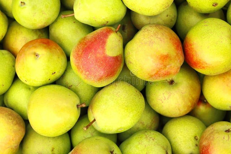 August Gather av päron royaltyfria foton