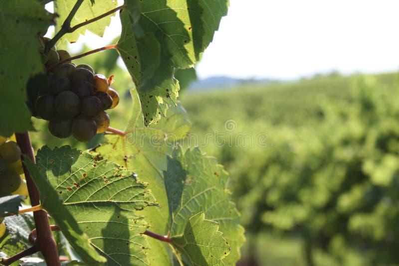 Augusta Missouri Wine Country I 2019 fotografia stock