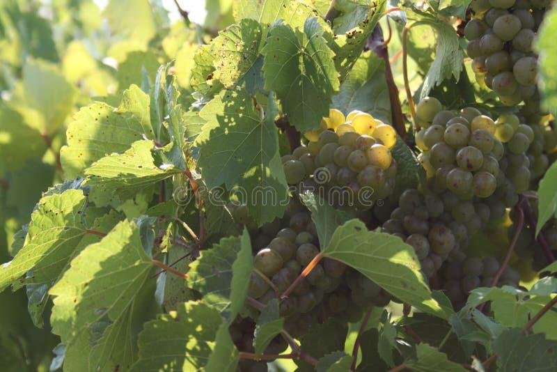 Augusta Missouri Wine Country I 2019 fotografia stock libera da diritti