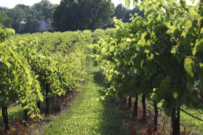 Augusta Missouri Wine Country 2019 II fotografie stock libere da diritti