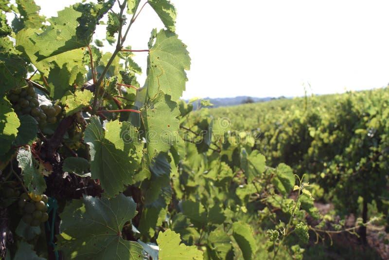 Augusta Missouri Wine Country 2019 III immagini stock