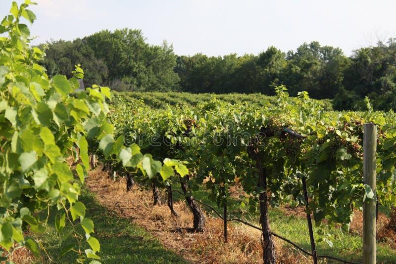 Augusta Missouri Wine Country X 2019 immagine stock libera da diritti