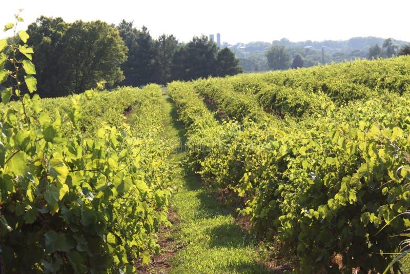 Augusta Missouri Wine Country 2019 IV fotografia stock libera da diritti