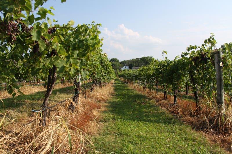 Augusta Missouri Wine Country 2019 IX fotografia stock libera da diritti