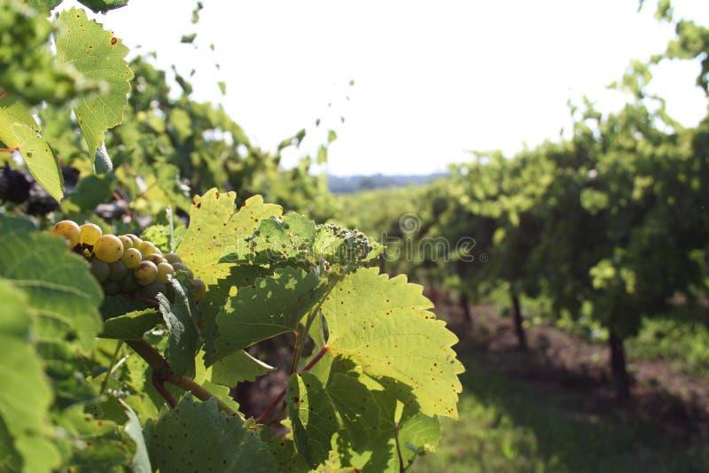 Augusta Missouri Wine Country 2019 V immagine stock libera da diritti