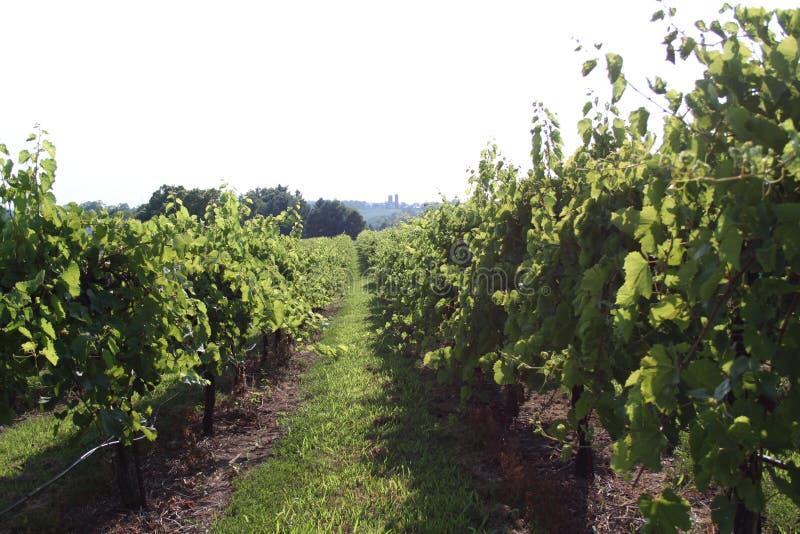 Augusta Missouri Wine Country 2019 VI fotografia stock libera da diritti