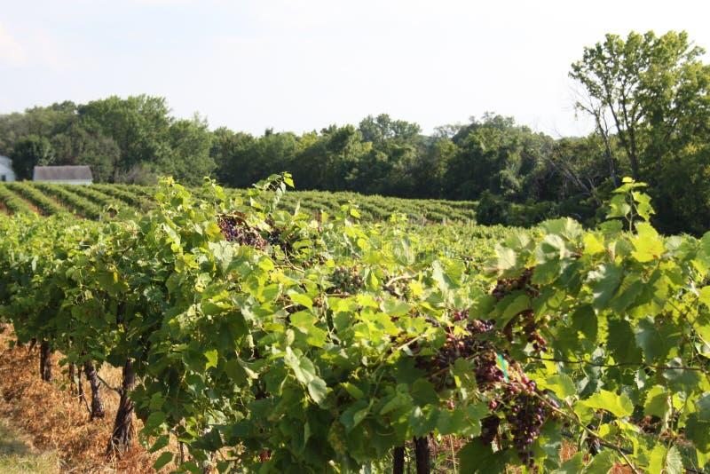Augusta Missouri Wine Country 2019 XII immagini stock libere da diritti