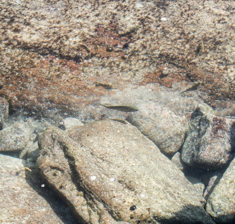 Augusta vuurtoren en Leeuwin-kustkustlijn stock foto