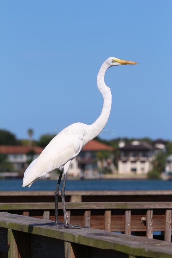 Augustine, Florida stockfoto