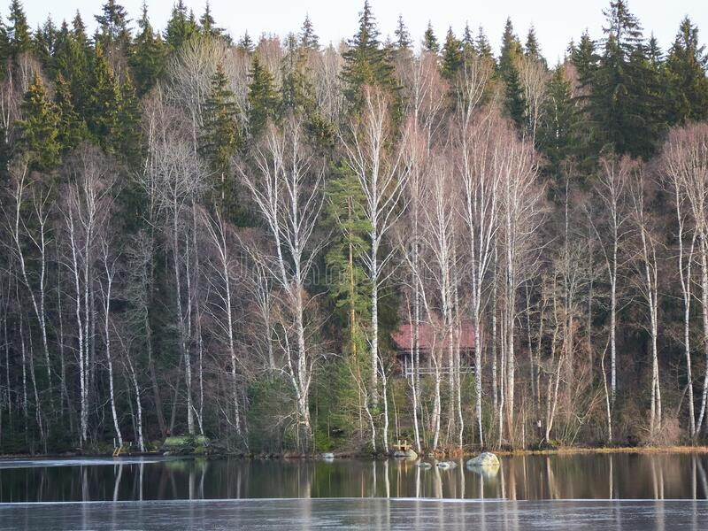 Aulankojarvi lake in snowless winter scene. Snowless trees and cottages by the lake in the winter in the Aulanko nature park in Hameenlinna, Finland. Sunny royalty free stock image