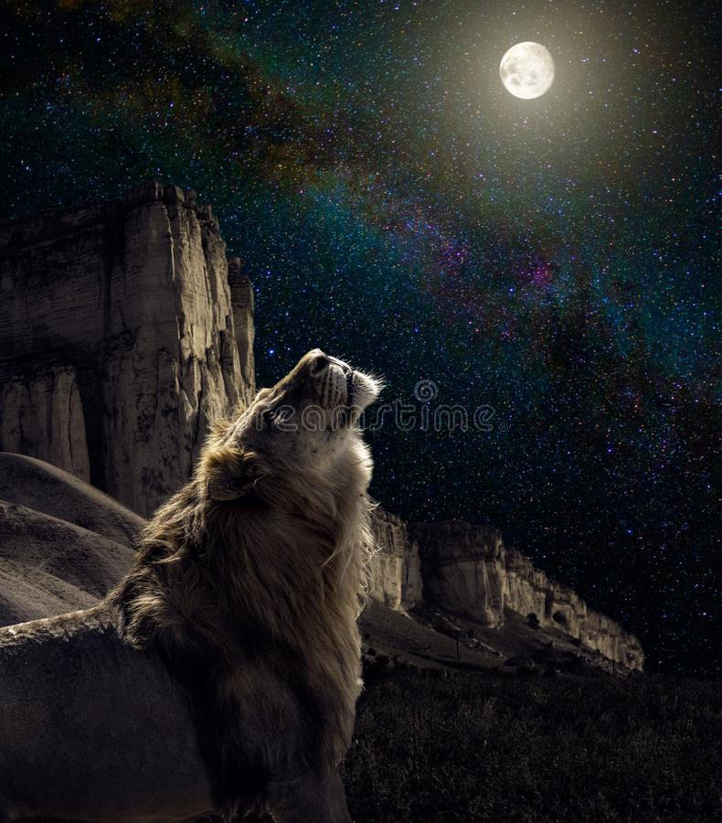 Aullido del león a la luna imagen de archivo