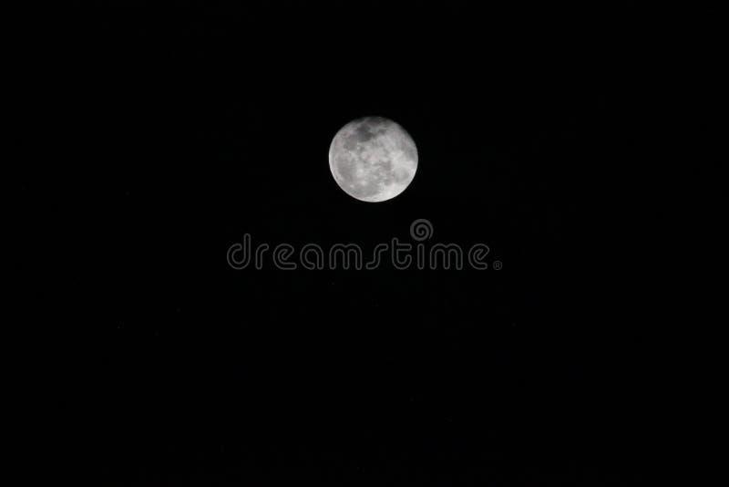 Aullido en la luna imagenes de archivo