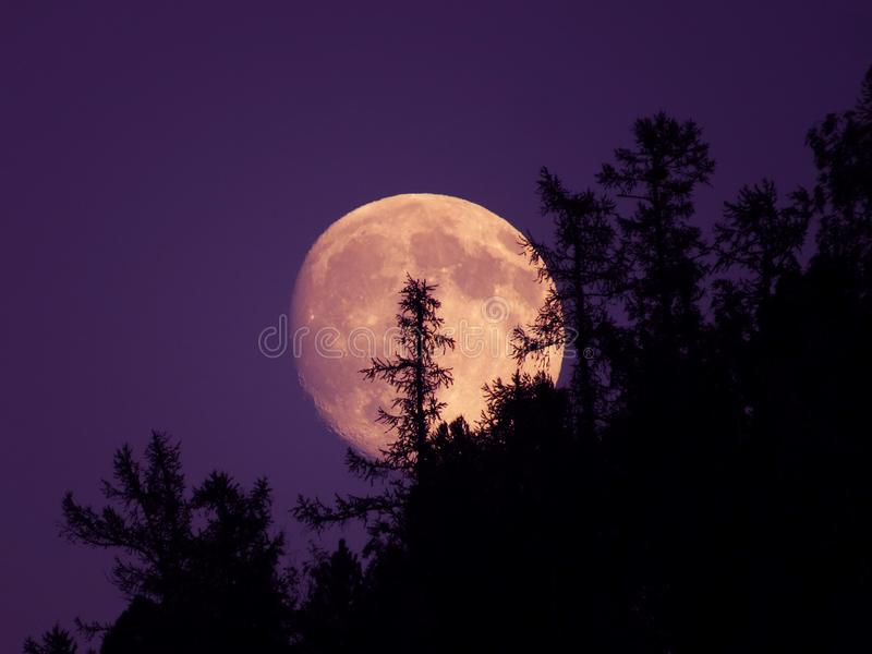 Aumentando da dietro gli alberi la luna fotografia stock libera da diritti