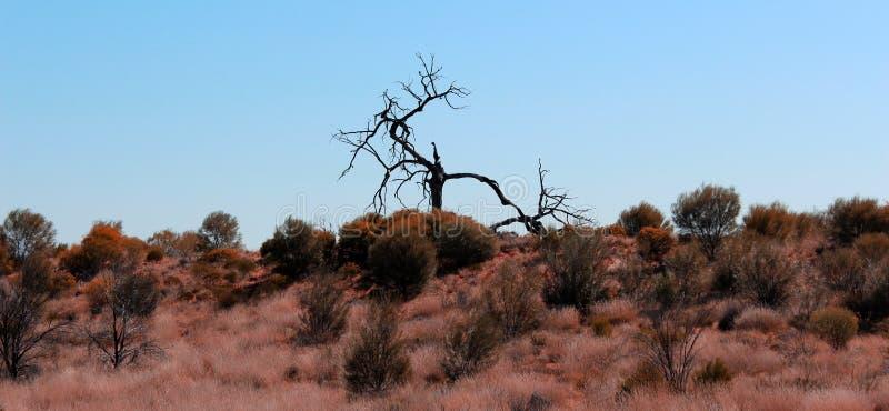 Aumento dell'albero cieco da un occhio immagini stock libere da diritti