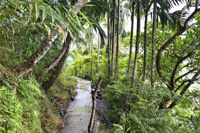 Aumento della giungla di Filippine immagini stock