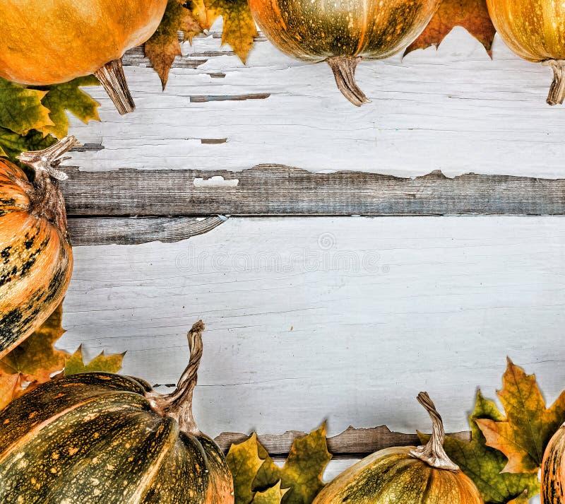 aunumn tło opuszczać życie nad spokojny dziękczynieniem drewniany Banie na białym drewnianym tle Uwalnia przestrzeń dla teksta na zdjęcia royalty free