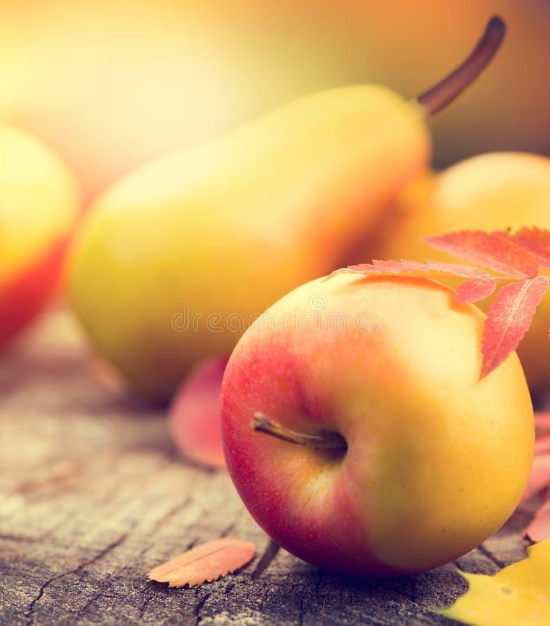 aunumnbakgrund låter vara livstid över still tacksägelse trä Sidor, äpplen och päron för höst färgrika royaltyfri foto