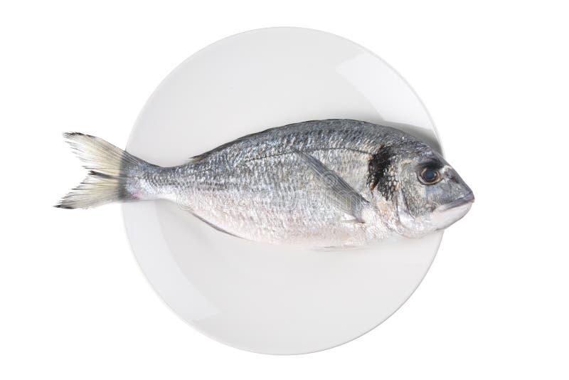 auratus rybiego talerza sparus rybi obrazy stock