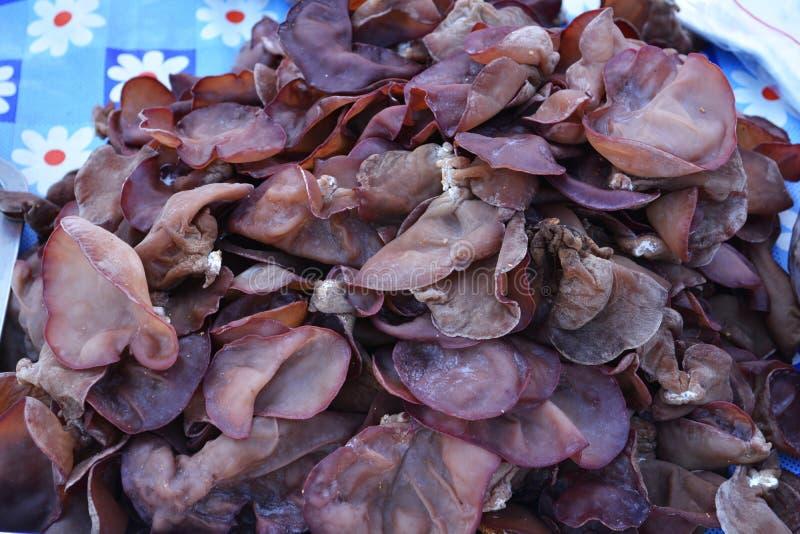 Auricula Judae Auricularia στοκ εικόνα με δικαίωμα ελεύθερης χρήσης