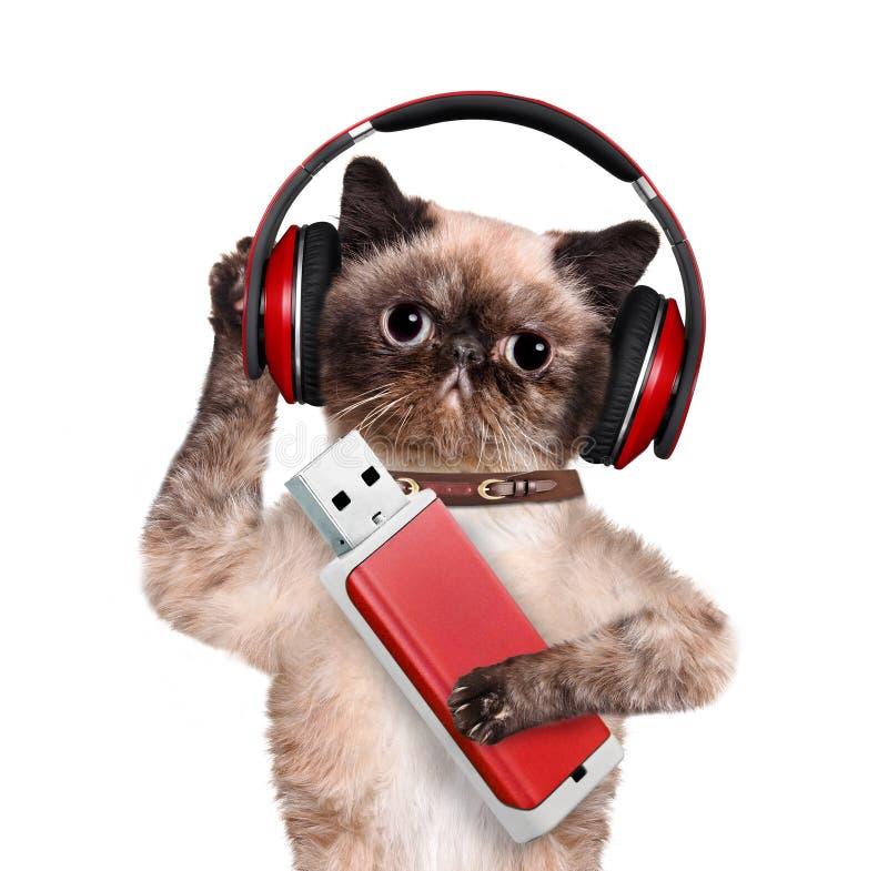 Auriculares del gato imagenes de archivo