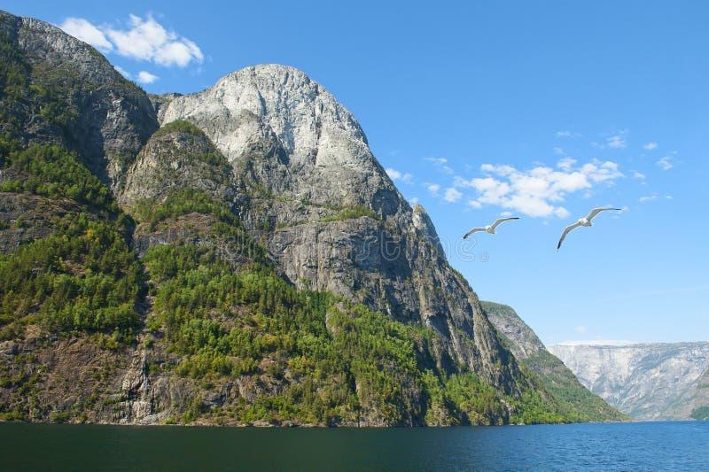 Aurlandsfjord et Naeroyfjord - l'UNESCO a protégé le fjord - croisière Naeroyfjord et mouettes photographie stock libre de droits
