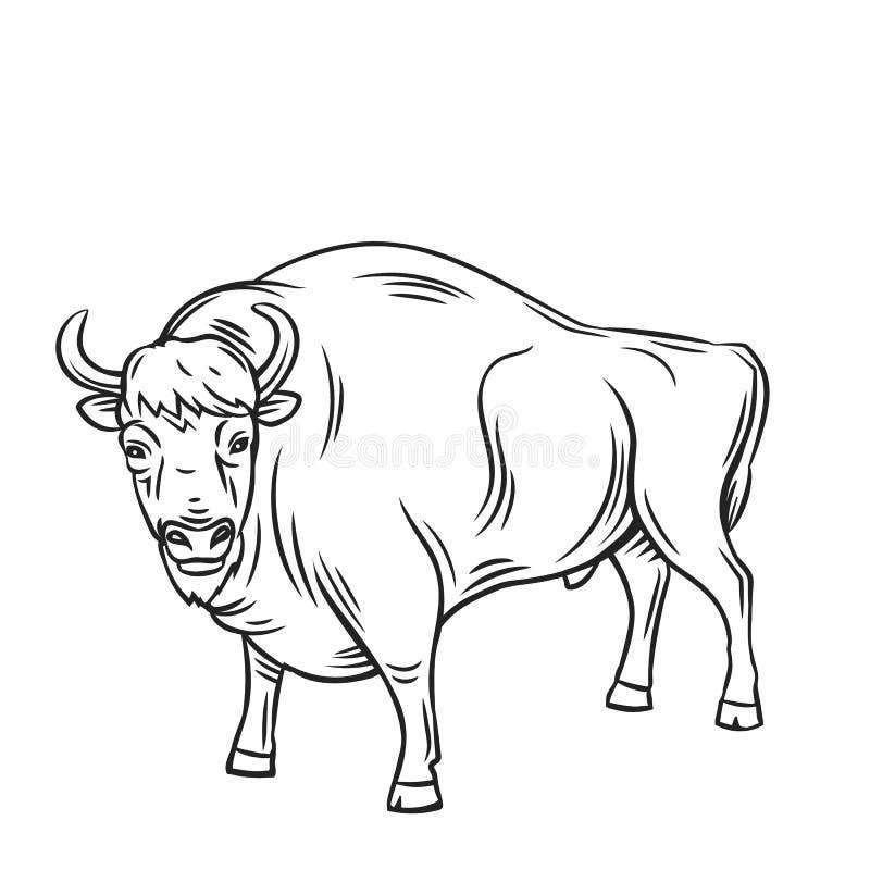 Aurochs ou bison illustration libre de droits