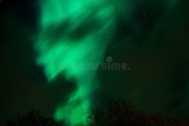 aurora stock foto's