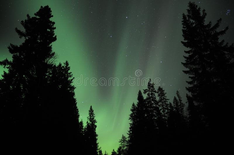 Aurora above the forestNorway royalty free stock photography