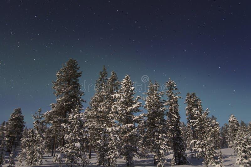 Aurora boreal bonita sobre a floresta e o tre coberto de neve fotografia de stock royalty free