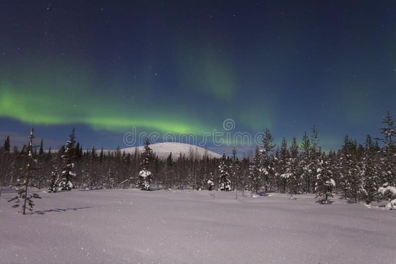 Aurora boreal bonita sobre a floresta e o tre coberto de neve fotos de stock