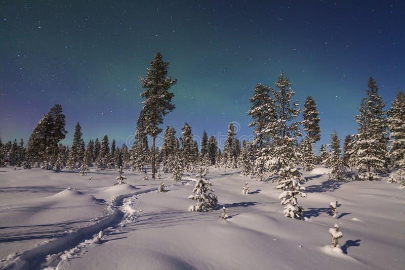Aurora boreal bonita sobre a floresta nevado fotos de stock royalty free