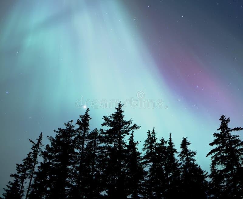 Aurora boreal do Alasca imagem de stock