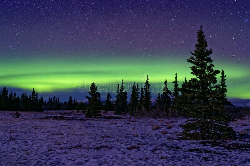 Aurora boreal en bosques del parque nacional de Kluane foto de archivo