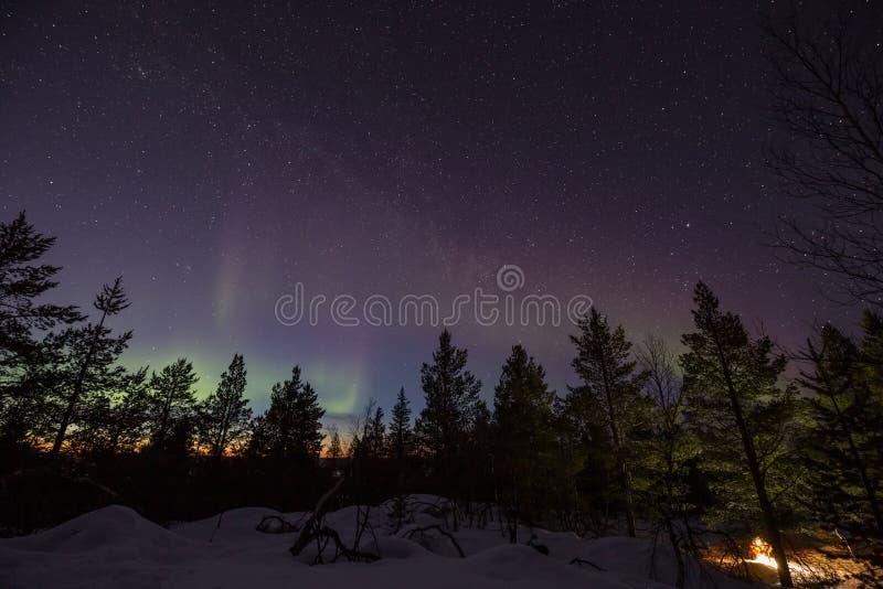 Aurora boreal sobre uma floresta nos montes de Inari, Finlandia fotos de stock royalty free