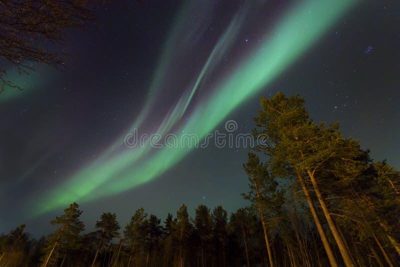 Aurora boreale sopra la foresta immagini stock libere da diritti