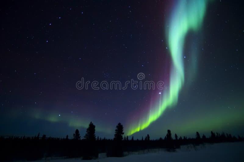 Aurora borealis über arktischer Tundra stockfotos
